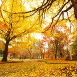 秋になると突然ひどい咳き込みが・・・  それ花粉症かもしれませんよ?