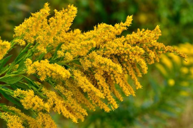 ブタクサの嘆願!花粉飛散時期、時間帯など役立つ情報告白とは